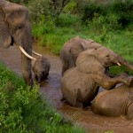 samburu-elephants_3642_610x343