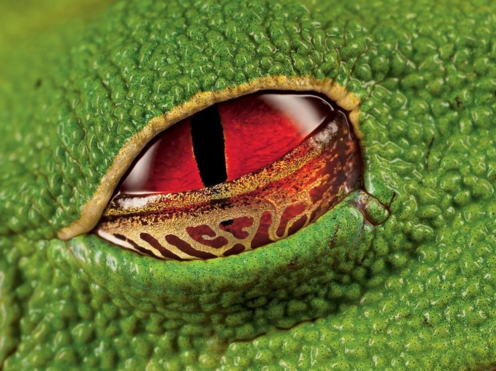 Frog Eyes Human Eyes Did We Come From Outer Space